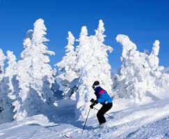 Package Tour To Shimla